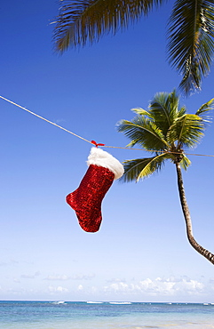 Christmas sock, Las Terrenas, Samana Peninsula, Dominican Republic, West Indies, Caribbean, Central America