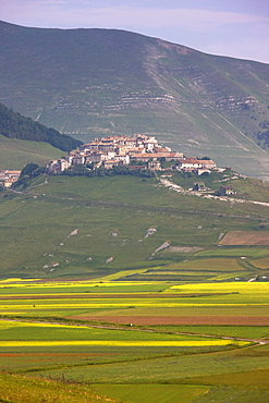 Fields of lentils and Castelluccio di Norcia, Highland of Castelluccio di Norcia, Norcia, Umbria, Italy, Europe