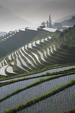 Longsheng terraced ricefields in June, Guangxi Province, China, Asia