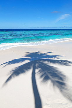 The shadow of a lone palm tree cast on a deserted beach on an island in the Maldives, Indian Ocean, Asia