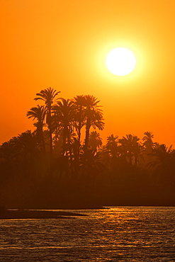 Sunset over palm trees on the banks of the River Nile, Egypt, North Africa, Africa