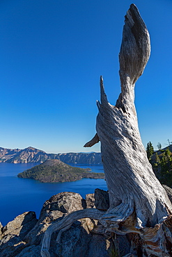 Lone tree trunk over Crater Lake, the deepest lake in the U.S.A., part of the Cascade Range, Oregon, United States of America, North America