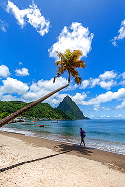Man walking under a lone palm on the beach at Soufriere with Petit Piton in the distance, St. Lucia, Windward Islands, West Indies Caribbean, Central America