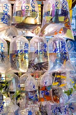 Fish in bags in Tung Choi Street, a street full of shops selling tropical fish, koi carp and goldfish, Mongkok, Hong Kong, China, Asia