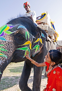 Woman in colourful sari with a painted ceremonial elephant in Jaipur, Rajasthan, India, Asia