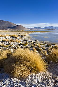 The altiplano at an altitude of over 4000m looking over the salt lake Laguna de Tuyajto, Los Flamencos National Reserve, Atacama Desert, Antofagasta Region, Norte Grande, Chile, South America