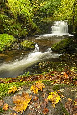 Waterfalls on Hoar Oak Water at Watersmeet in autumn, Exmoor National Park, Somerset, England, United Kingdom, Europe
