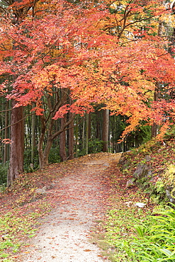 Autumn foliage on Nakasendo Way, Tsumago, Gifu Prefecture, Honshu, Japan, Asia