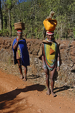 Bonda tribeswomen in traditional dress with beads, earrings and necklaces denoting their tribe, carrying basket and brushes to market, Onukudelli, Orissa, India, Asia