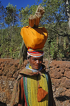 Bonda tribeswoman in traditional dress with beads, earrings and necklaces denoting her tribe and purse round her neck, carrying brushes to market, Onukudelli, Orissa, India, Asia