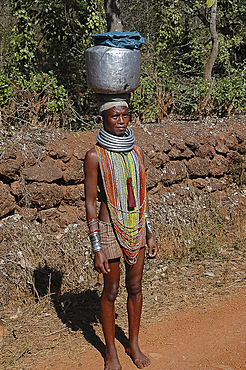 Bonda tribeswoman on her way to market in traditional dress with beads and necklaces denoting her tribe, Onukudelli, Orissa, India, Asia