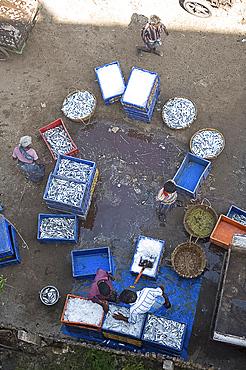 Sorting the morning's catch of fish, Dhanushkodi, Tamil Nadu, India, Asia