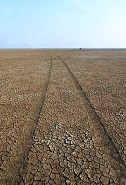 Jeep tracks in the desert of the Little Rann of Kutch near Dasada, Gujarat, India, Asia