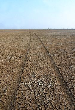 Jeep tracks in the desert of the Little Rann of Kutch near Dasada, Gujarat, India, Asia