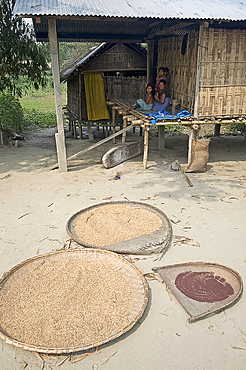 Grain and peppercorns drying in the sun in front of Mishing tribal house, Majuli Island, Assam, India, Asia