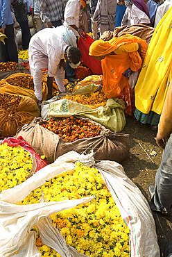 Woman buying marigolds tied up in cloth and sacking, flower market, Bari Chaupar, Jaipur, Rajasthan, India, Asia