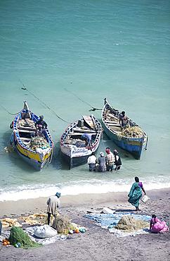 Unloading the morning's catch of fish, Dhanushkodi, Tamil Nadu, India, Asia