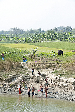 Men on the banks of the River Hugli (River Hooghly) after early morning puja, near village ricefields and banana paddy fields, rural West Bengal, India, Asia