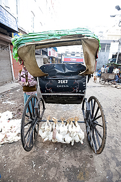 Chickens hung by their legs to axle underneath running rickshaw in New Market, Kolkata, West Bengal, India, Asia