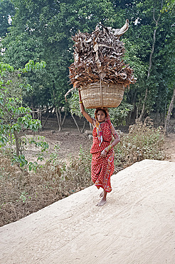 Village woman in red sari carrying basket of dry palm leaves on her head, Ballia, rural Orissa, India, Asia