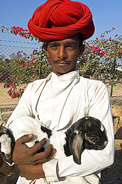Bharwadi goatherd in red turban and typical costume holding kid, Poshina district, Eastern Gujarat, India, Asia