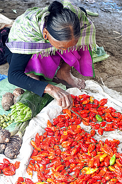 Naga woman sorting red hot chillies with a stick on her market stall in Tizit village local market, Nagaland, India, Asia