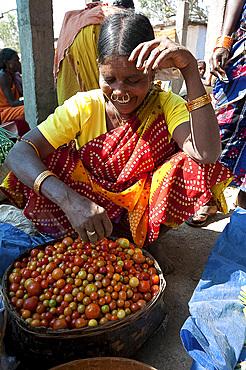 Mali tribeswoman with gold noserings selling tomatoes in Mali weekly tribal market, Guneipada, Koraput district, Orissa (Odisha), India, Asia