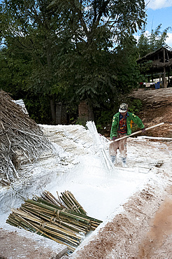 Man dipping bunches of bamboo into limewash to assist in oftening them for the papermaking process, Hsipaw, Shan state, Myanmar (Burma), Asia