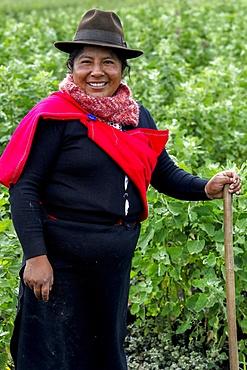 Indigenous woman in a quinoa field in San Jose de Tanquis, Ecuador