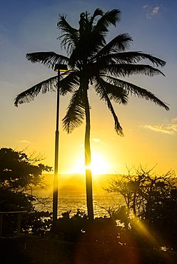 Backlit palm tree in the Fortress of Fortaleza San Felipe, Puerto Plata, Dominican Republic, West Indies, Caribbean, Central America
