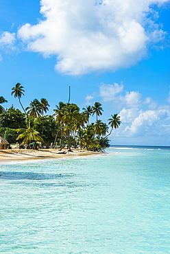 Sandy beach and palm trees of Pigeon Point, Tobago, Trinidad and Tobago, West Indies, Caribbean, Central America