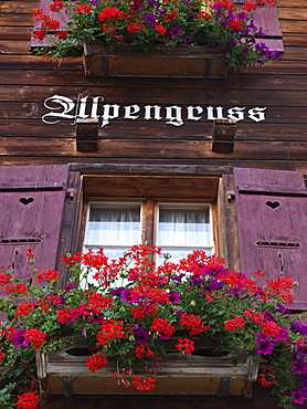 Potted geraniums in a window sill of a traditional Swiss chalet house, Wengen, Switzerland, Europe