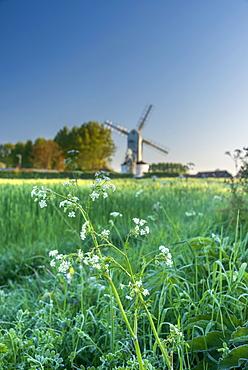 Saxtead Green Windmill, post mill design, Saxtead Green, Suffolk, England, United Kingdom, Europe