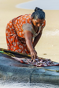 Woman sorting small fish on simple fishing raft at popular Marari Beach, Mararikulam, Alappuzha (Alleppey), Kerala, India, Asia