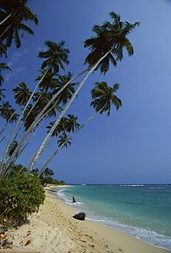 Palm trees and sandy beach on the south coast, Unawatuna, Sri Lanka, Indian Ocean, Asia