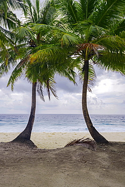 Two palm trees on deserted tropical beach, Fuvahmulah island, Indian Ocean, Maldives, Asia