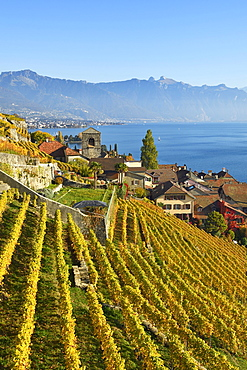 Vineyards in autumn, view of Lake Geneva and winegrowing village Saint-Saphorin, Lavaux, Canton of Vaud, Switzerland, Europe