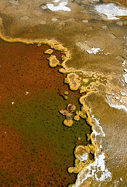 Detailed view of the discoloration caused by bacteria and algae on a geyser, Geyser Hill, Old Faithful Area, Yellowstone National Park, Wyoming, USA, North America