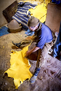 Worker working on leather, dying, tannery, Tannerie Chouara, tanner and dyer quarter, Fes el Bali, Fes, Kingdom of Morocco, Africa
