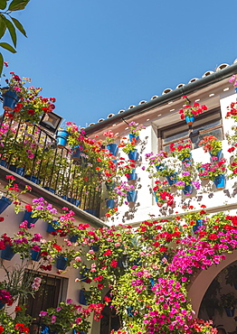 Many red geraniums in blue flowerpots in the courtyard on a house wall, Fiesta de los Patios, Cordoba, Andalusia, Spain, Europe