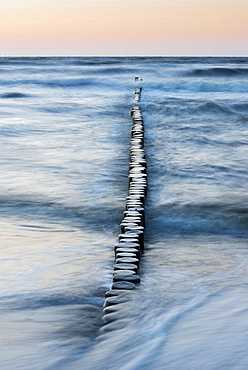 Breakwaters or groynes in the evening light, breaking wave, Baltic Sea, Zingst, Fischland-Darss-Zingst peninsula, Mecklenburg-Western Pomerania, Germany, Europe