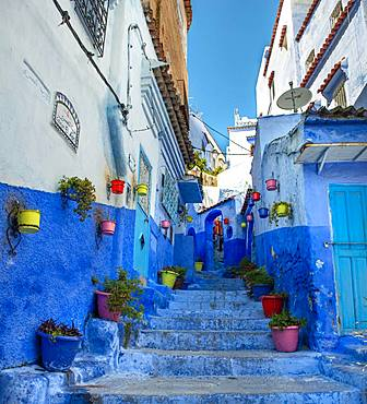 Narrow alley with colorful flowerpots, blue houses, Medina of Chefchaouen, Chaouen, Tangier-Tetouan, Morocco, Africa