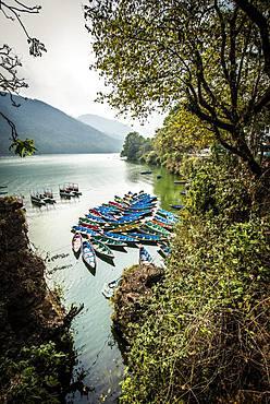 Colorful boats on Phewa Lake, Pokhara, Nepal, Asia