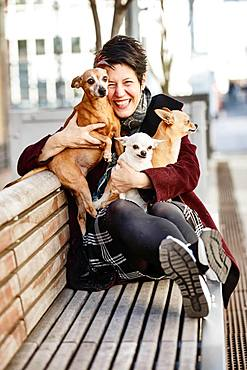 Woman sitting laughing with her three dogs on a bench, Miniature Pinscher and two Chihuahuas, North Rhine-Westphalia, Germany, Europe
