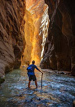 Hiker walks in the water, The Narrows, narrow place of the Virgin River, steep walls of the Zion Canyon, Zion National Park, Utah, USA, North America