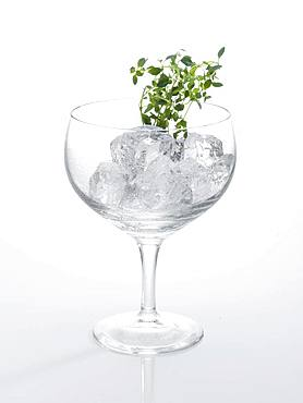 Glass prepared for cocktail, decorated with thyme, ice cubes, Germany, Europe