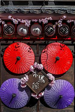 Japanese-decorated house wall with cherry blossoms and umbrellas, Asakusa, Tokyo, Japan, Asia