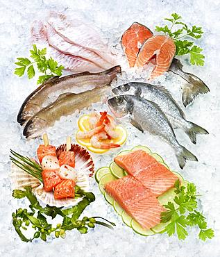 Selection of various raw fish, shrimp, on ice, Germany, Europe