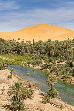 Palms in the oasis, Taghit, western Algeria, Algeria, Africa