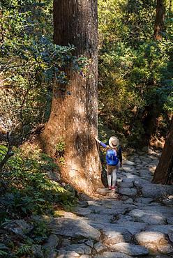 Hiker stands between big old trees, stony path in the forest to the Hirou-jinja Shinto shrine, pilgrim path Kumano Kodo, Nachisan, Wakayama, Japan, Asia